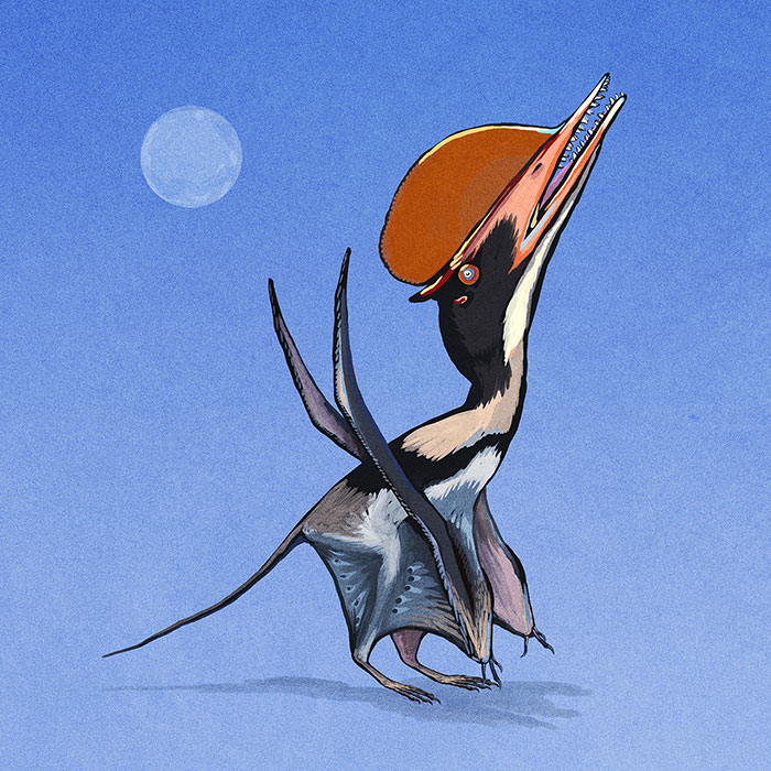 The Intermediate-Form Pterosaur, Darwinopterus Modularis, Flashes Its Red Crest For A Potential Mate