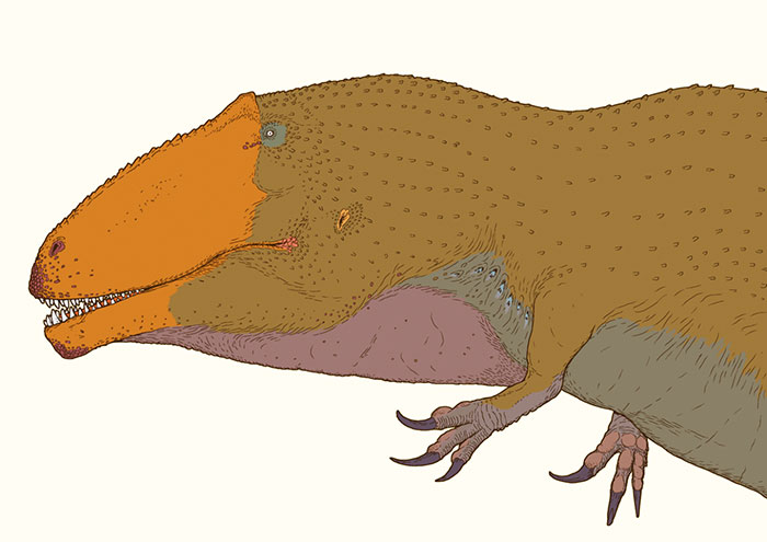 The Giant Meat-Eating Dinosaur, Giganotosaurus, Here Restored With A Throat Sac. This Animal Had Tiny Arms That Terminated In Hook-Like Claws