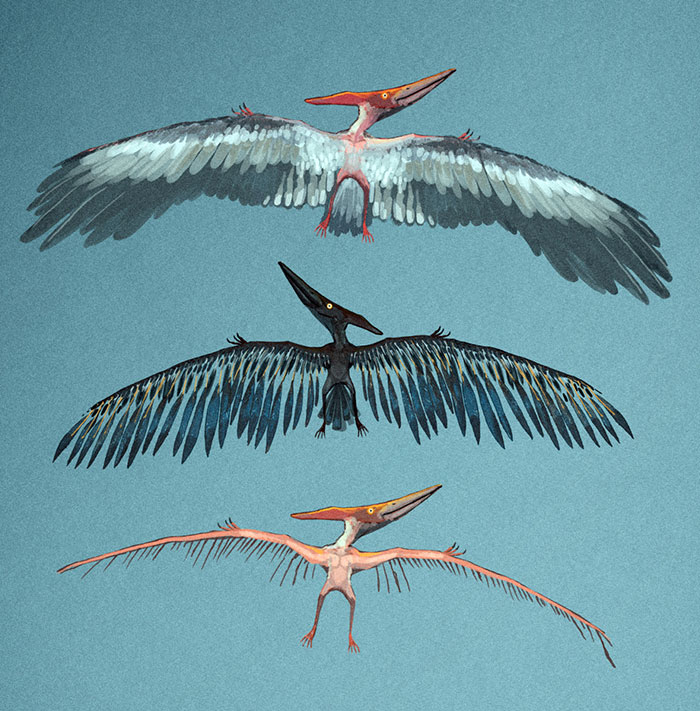 A Pterosaur With Bird-Like Feathers