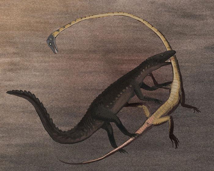 The Crocodile-Like Archosaur Ticinosuchus Attacks A Long-Necked Tanystropheus