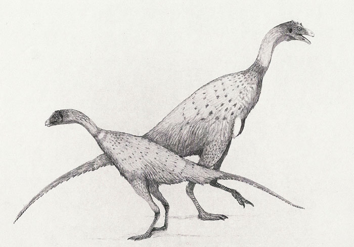 Male And Female Limusaurus Dinosaurs. Done In An Experimental New Style In Which I Draw, Scan, Print And Draw Over Successive Iterations Of The Same Image