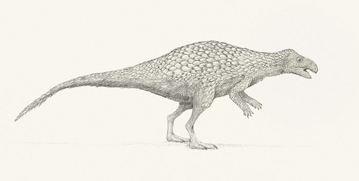 The Herbivorous Dinosaur Zalmoxes, Restored Speculatively With A Covering Of Thick, Pangolin-Like Scales Interspersed With Feathery Filaments
