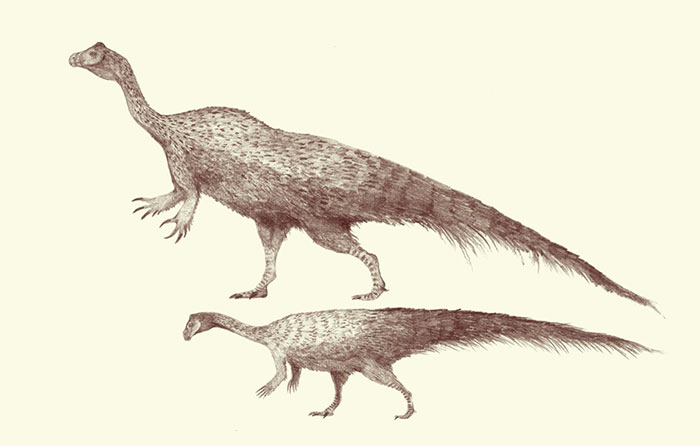 Scaled Pencil Drawings Of Large And Small Forms Of Plateosaurus. This Early Plant-Eating Dinosaur Exhibited A Large Variety In Body Sizes