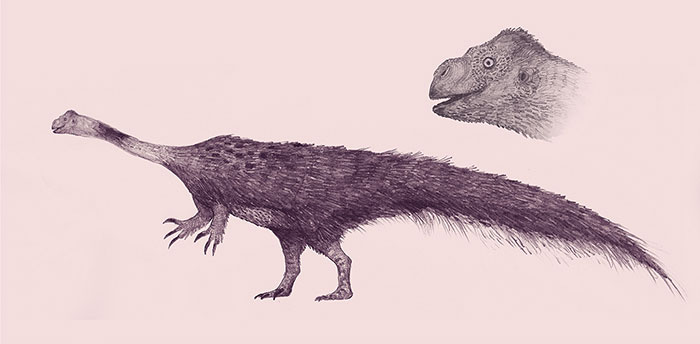 Pencil Study Of Massospondylus, The Goobiest Prosauropod