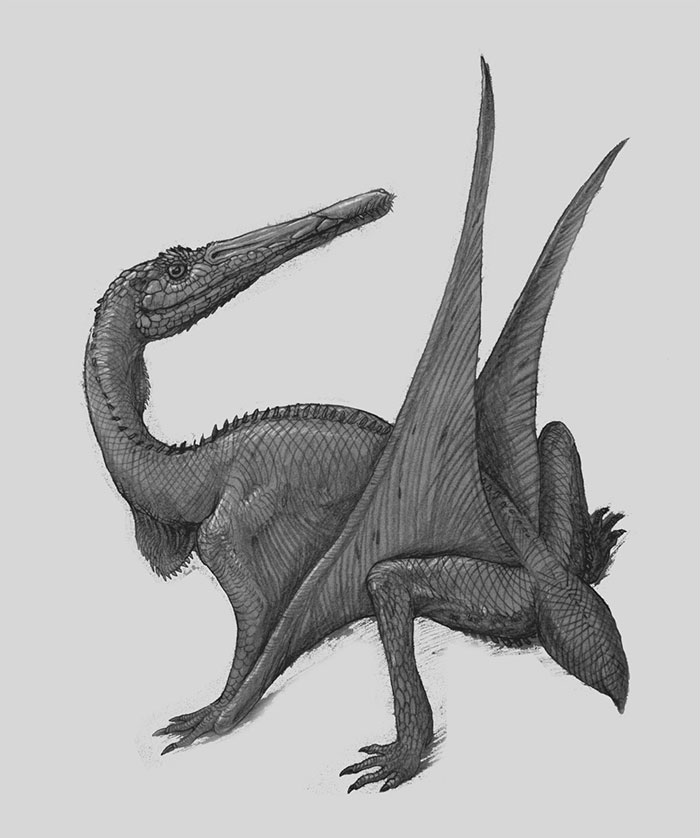 This Is A Purposefully Wrong Reconstruction Of Pterodactylus With Lizard-Like Features