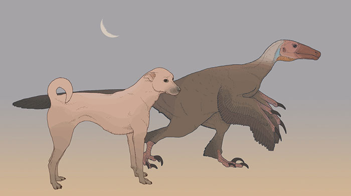 """Measured Drawing Of The """"Double Sickle-Claw"""" Dinosaur Balaur Bondoc From Late Cretaceous Romania, Compared To A Present-Day Dog"""