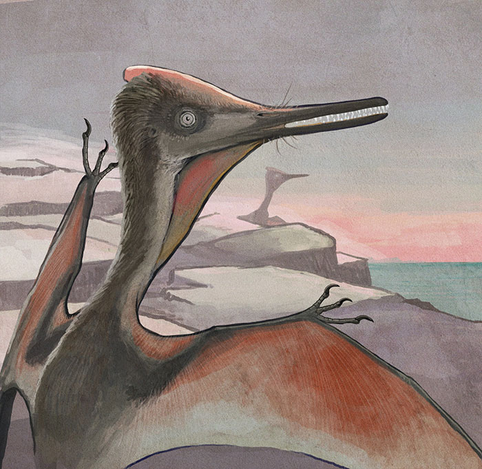 A Slightly Immature Pterodactylus Pterosaur By An Ancient Seashore. A Mature Specimen Can Be Seen On The Background