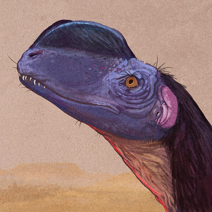 Portrait Of Sinosaurus, A Meat-Eating Dinosaur Once Thought To Be A Species Of The Dilophosaurus