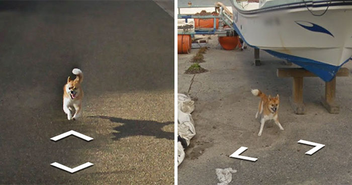 Dog Follows Google Street View Car In Japan, Hilariously 'Ruins' Each And Every Photo