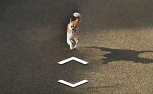 """Este perro persiguió al coche de Google Street View por Japón, """"arruinando"""" todas las fotos de forma divertida"""