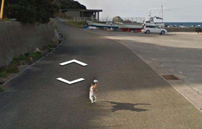 tiny-dog-follows-street-view-car-kagoshima-japan008