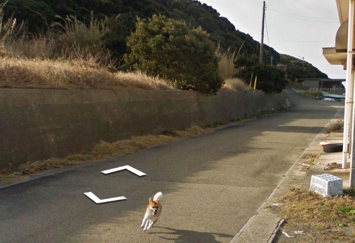 tiny-dog-follows-street-view-car-kagoshima-japan010