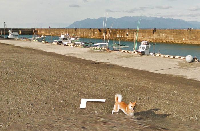 tiny-dog-follows-street-view-car-kagoshima-japan012