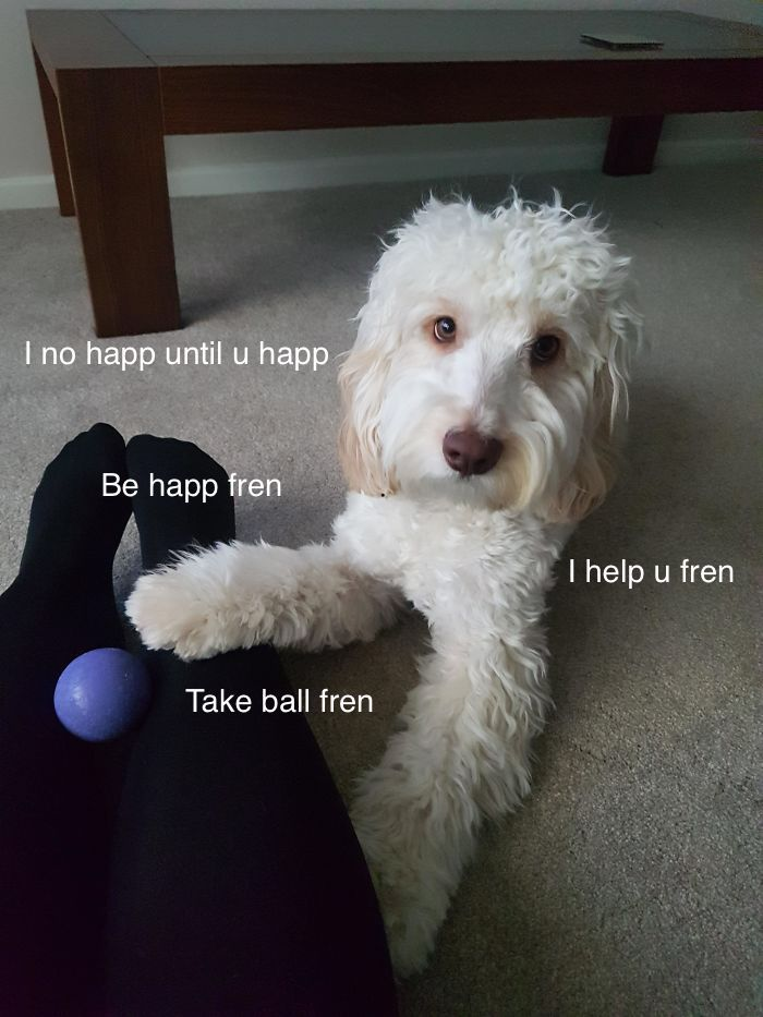 I Made These Pictures With The Sweet Dog Post And I Hope They'll Brighten Your Day