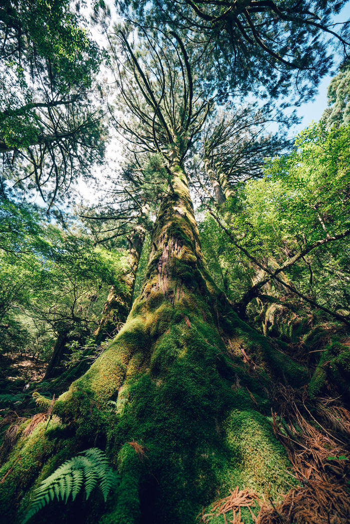 "I Photographed The Ancient ""Princess Mononoke"" Forest."