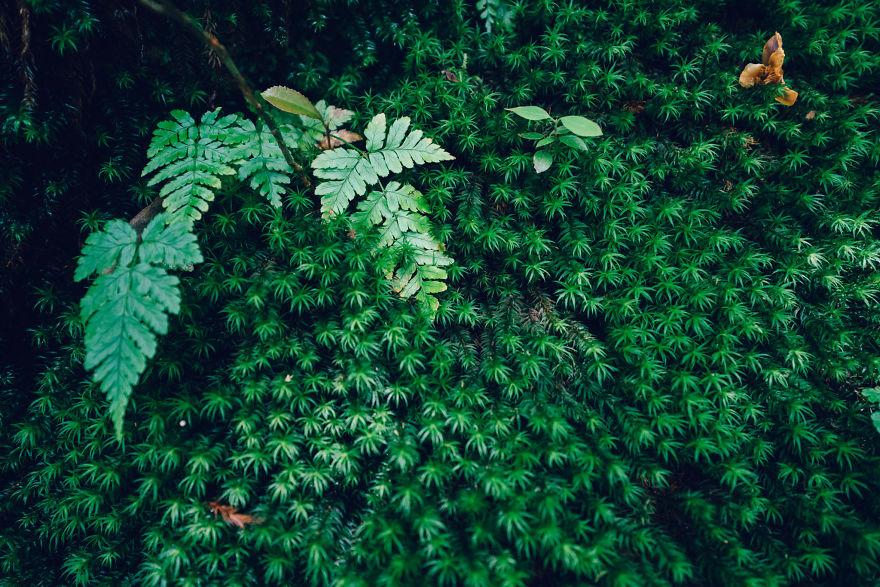 "I Photographed The Ancient ""Princess Mononoke"" Forest."