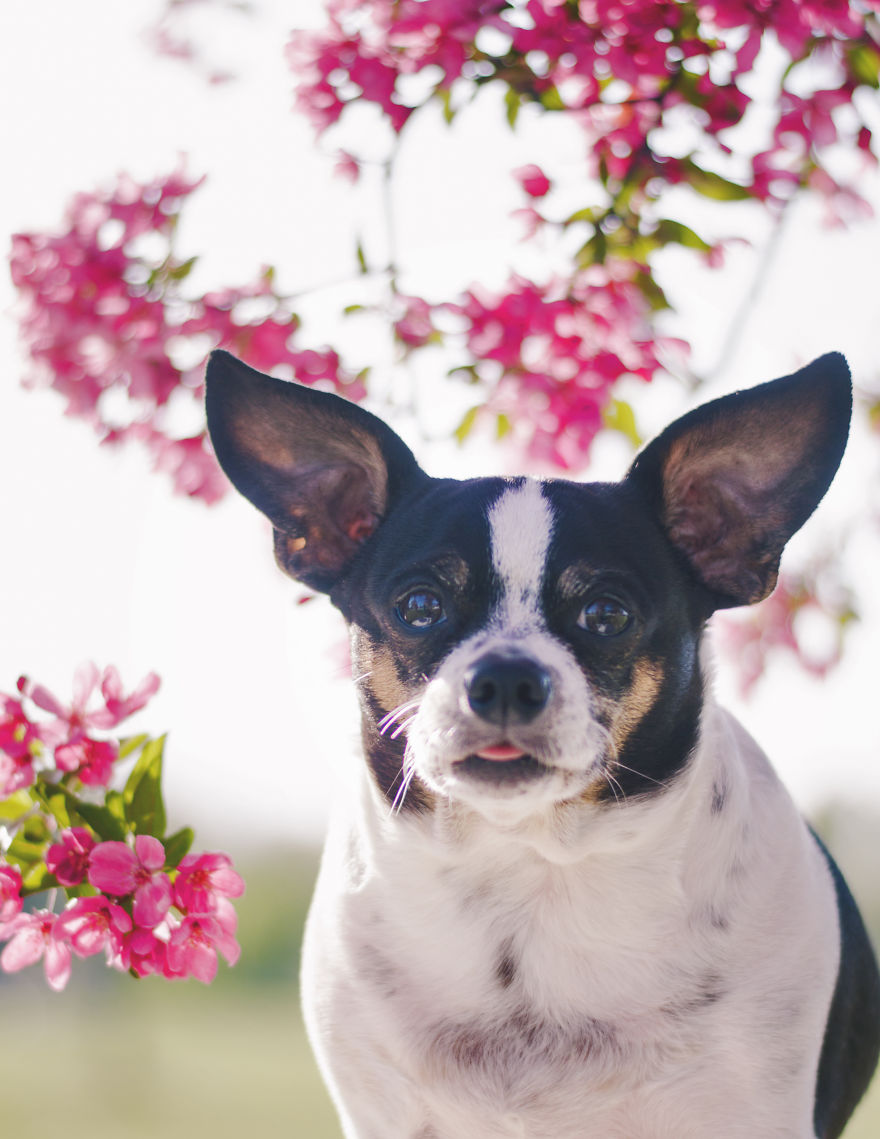 I Photographed Dogs In The Spring Blossoms