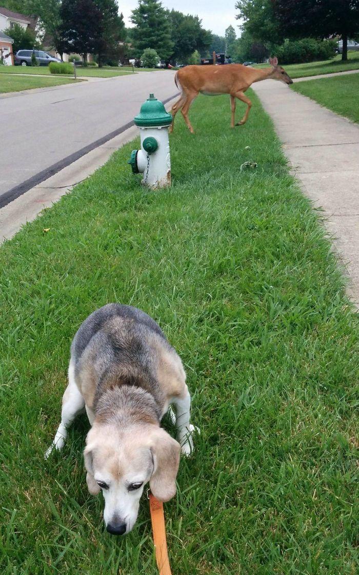 Mi perro de caza totalmente alerta