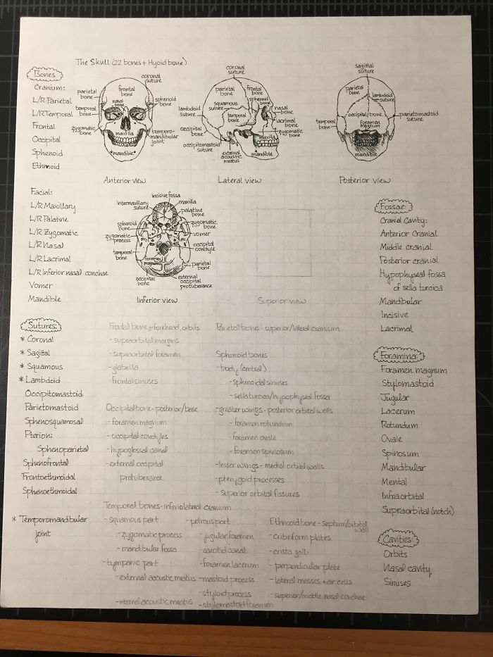 Some Of My Handwritten Anatomy Notes