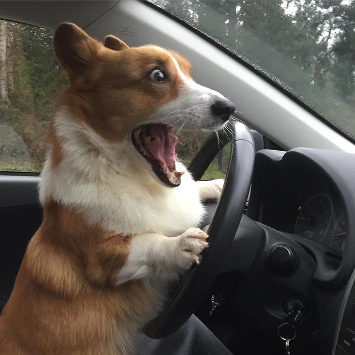 When You Can't Reach The Brakes