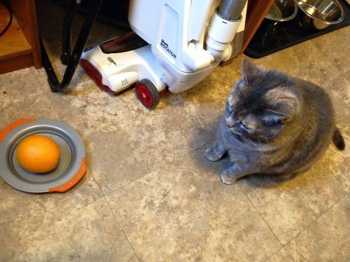 Le pedimos al niño que le diera de comer al gato
