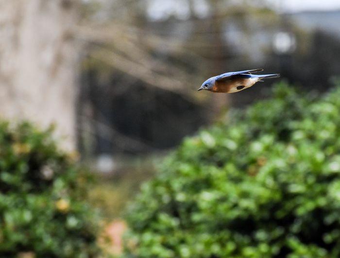 Pájaro en plena aceleración