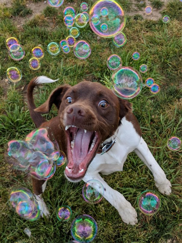 Bubbles = Happiest Dog Ever