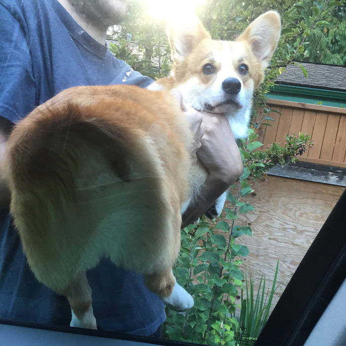 Things We Find Funny: Smooshing Wally's Floofy Butt Against A Window