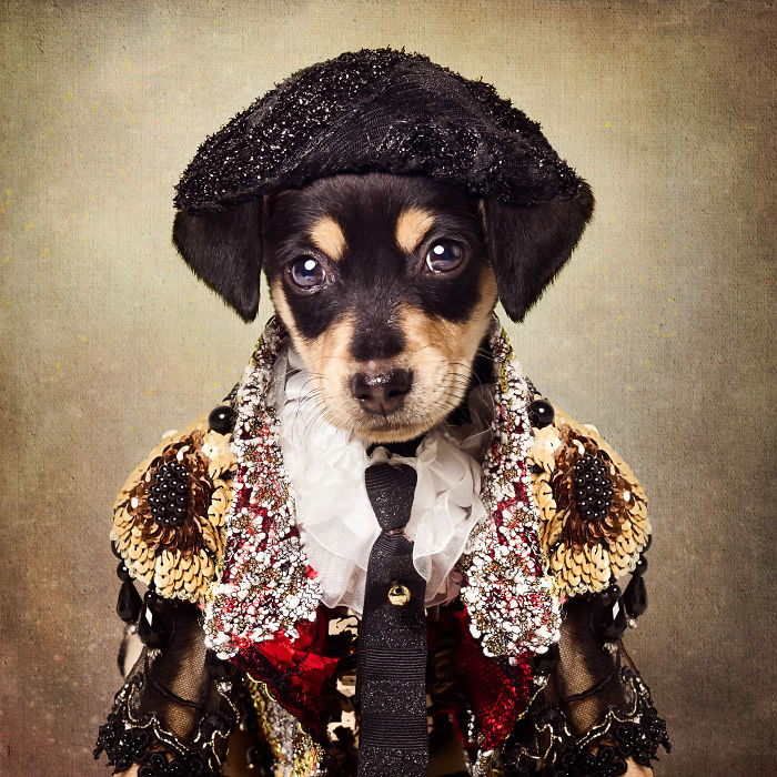 Shelter Dogs Dressed As Matadors