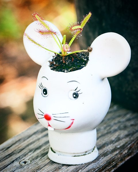 Creepy-Baby-Doll-Head-Planters