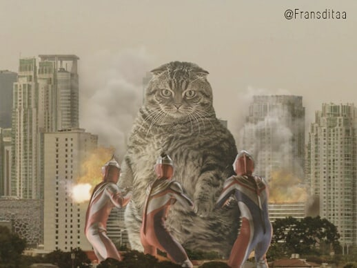 Giant Cat Edit