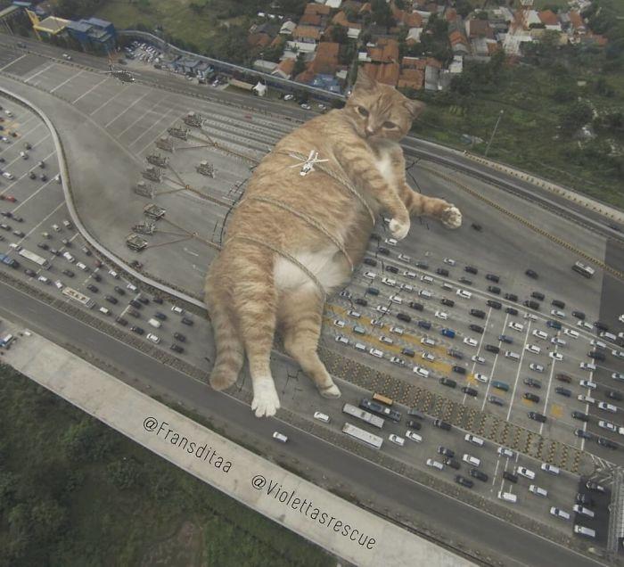 Giant Cat Edit