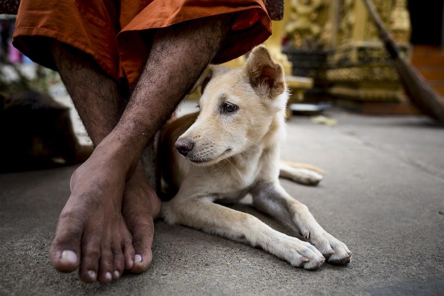 Dog in a temple | www.boredpanda.com