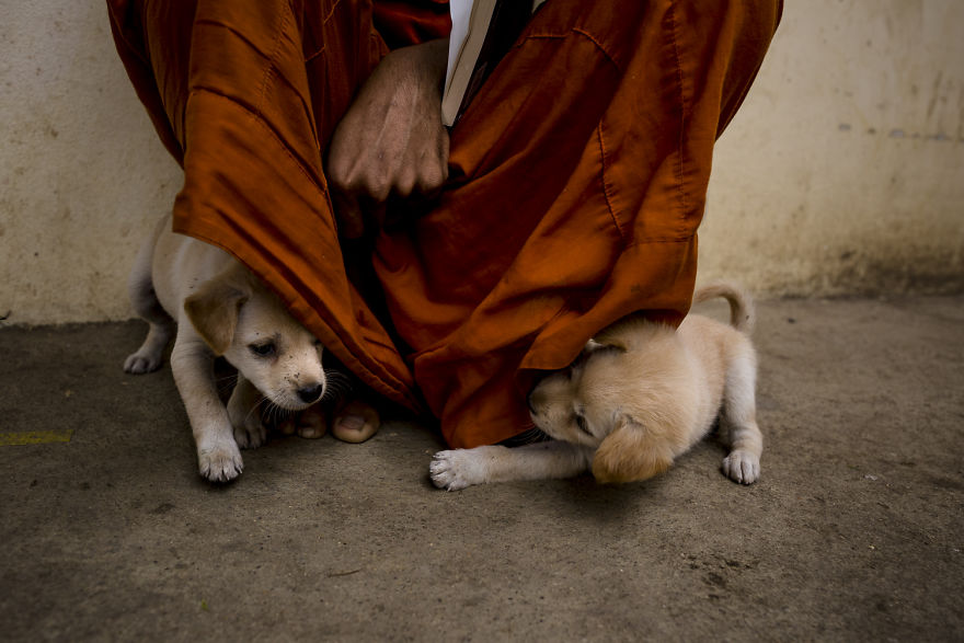 Little dogs playing around with the monk | www.boredpanda.com