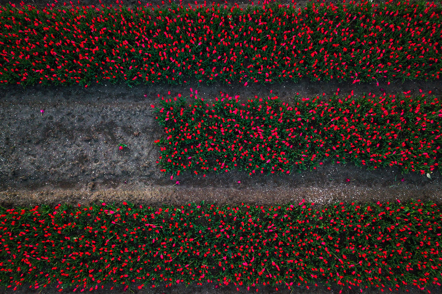 It's Great To Experiment With Top-Down Shots With A Drone Above The Tulips