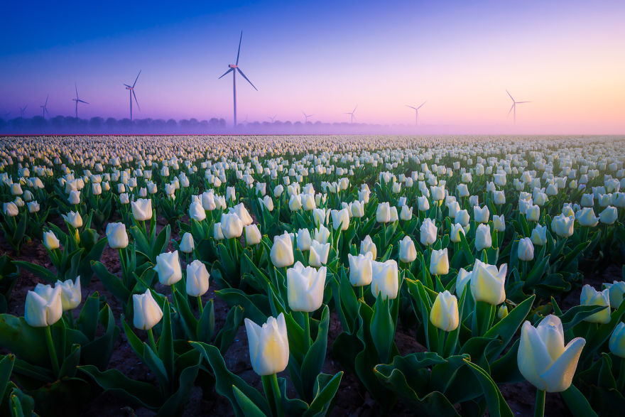 There Are A Lot Of Windmills And Wind Turbines In The Netherlands, Because It's Always Windy!