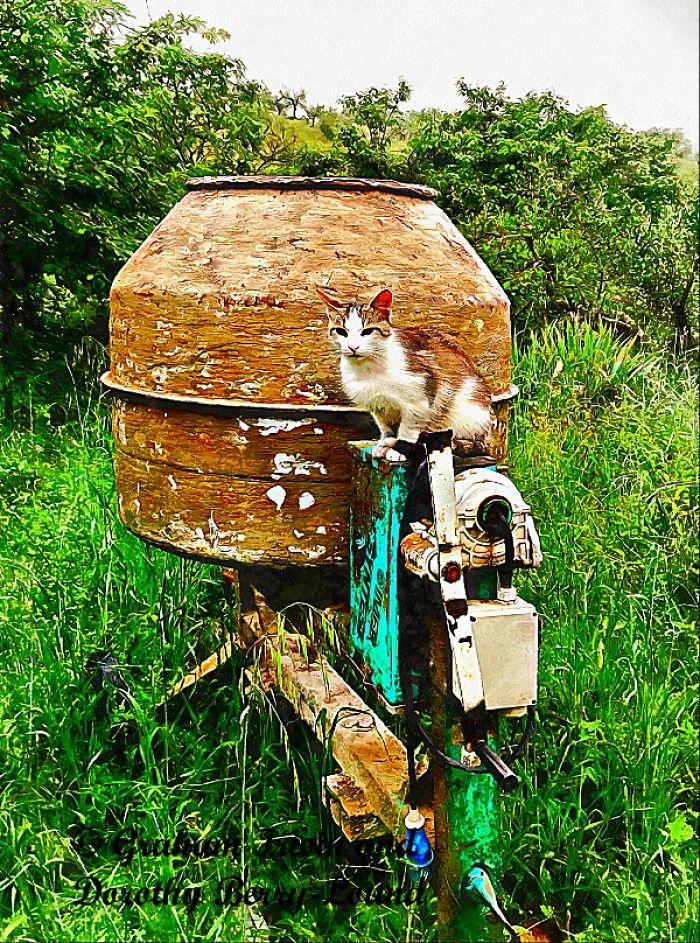 Feline Construction Apprentice Overcomes All Odds