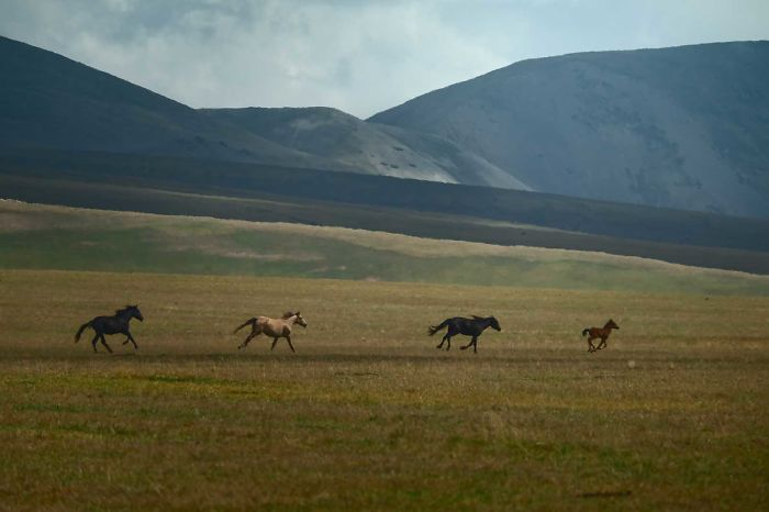 Horses Is A Main Source Of Income For Many Nomads In Kazakhstan, Which Makes These Animals Vulnerable To Thievery