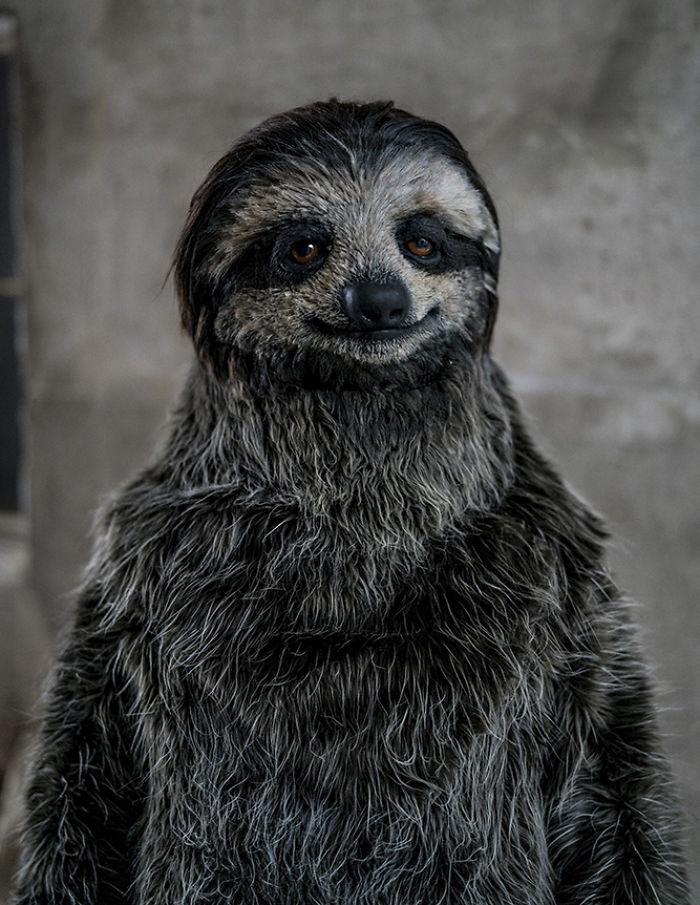 Художница, обожающая ленивцев, сделала костюм в виде этого зверька