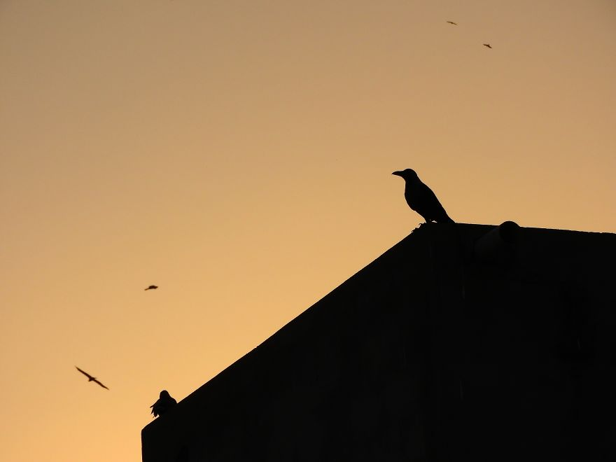 Started Shooting On My Rooftop Near Sunset For 4 Months And Got Amazing Silhouettes
