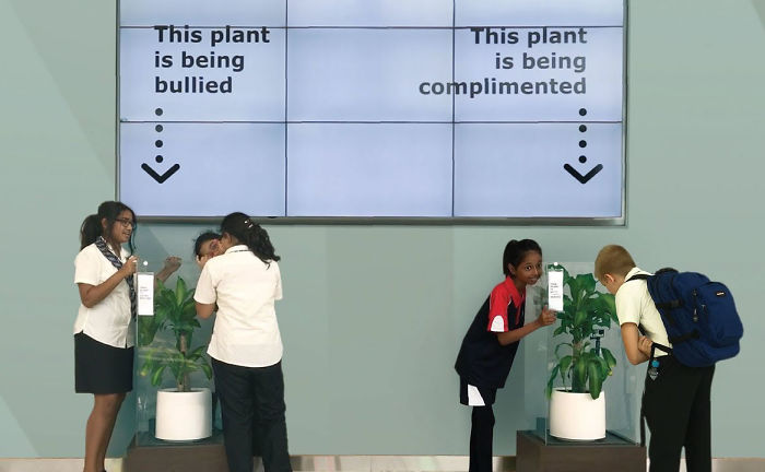 Ikea asks people to bully this plant for 30 days to see what happens what would happen if you bullied a plant for 30 days straight publicscrutiny Choice Image