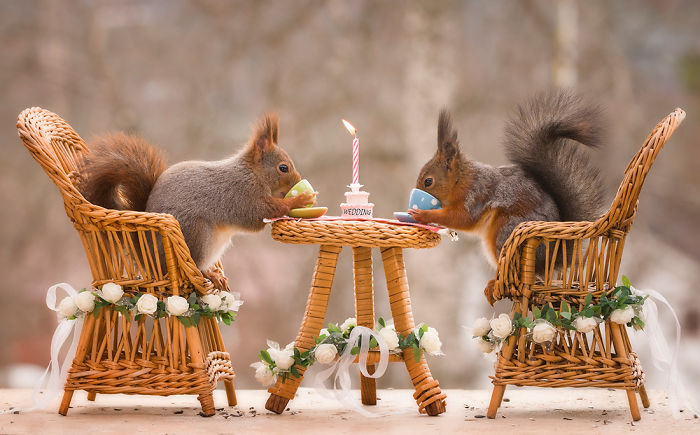 Wild Red Squirrels Get A Royal Wedding