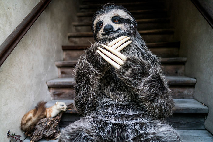 I Created A Realistic Sloth Costume
