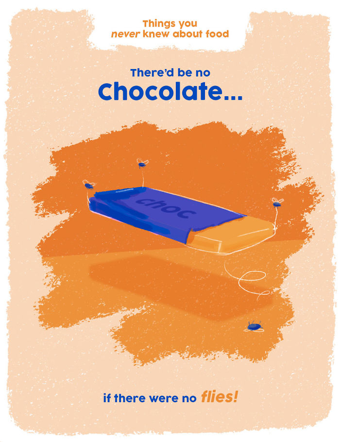 Without Flies, There Would No Chocolate