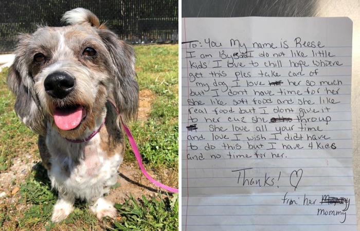 13-Year-Old Dog Dumped On Lawn With A Sad Note Seeks Help