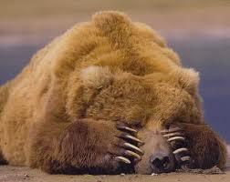 crying-bear-5ae8ca2ddbb4f.jpeg