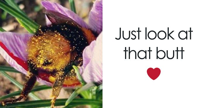 Someone Noticed How Cute Bumblebee Butts Are, And Now We Can