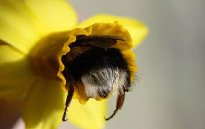 cute-bumblebee-butts-1-5af05f9474219__70