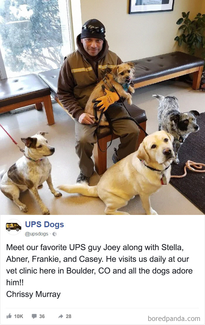 Drivers-Meet-Animals-Ups-Dogs