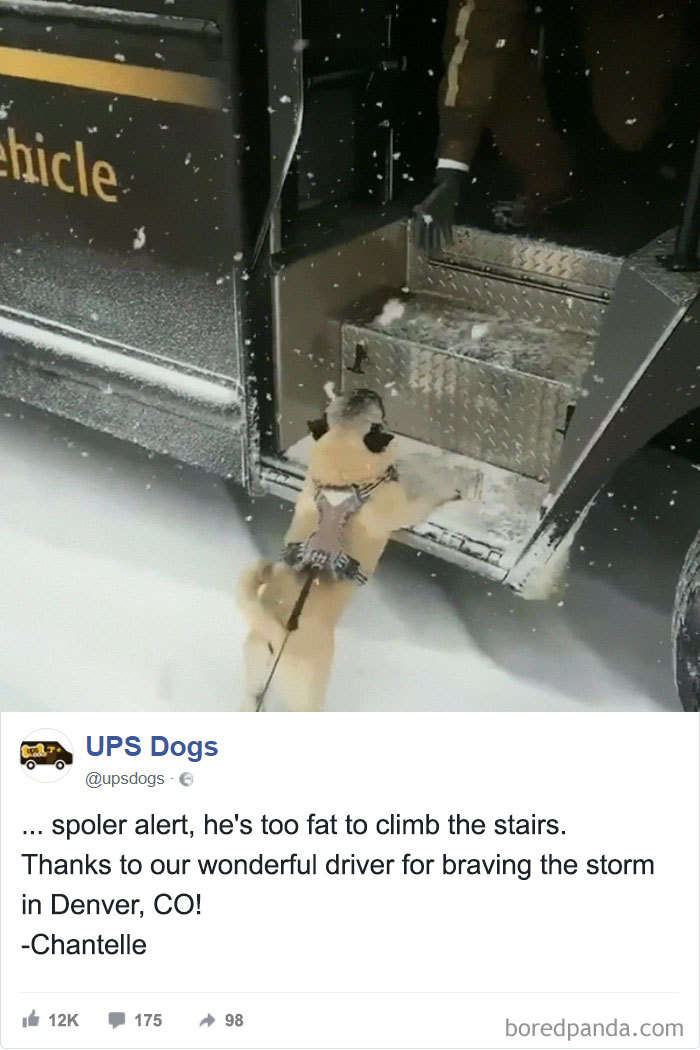 Drivers-Meet-Animals-Ups-Dogs
